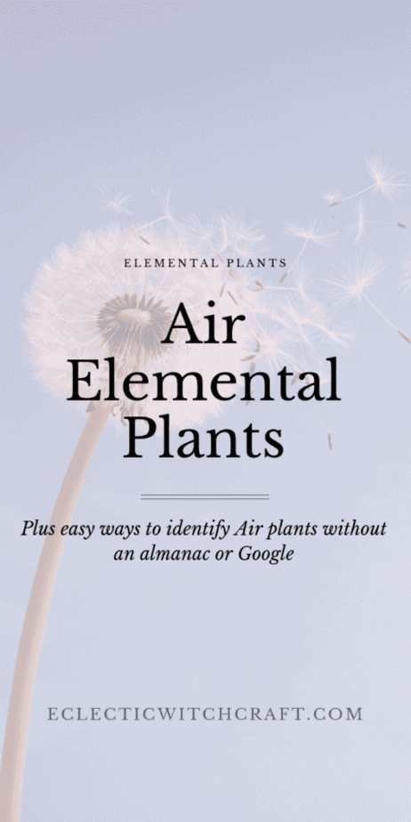 Start your gardening adventure right by learning the elemental correspondences of the plants you want to grow. Find the perfect indoor plants for air signs. Air element zodiac signs love these house plants. Indoor and outdoor plants that are perfect for air element witchcraft spells that work. Make your own DIY spells and rituals for witches, pagans, and Wiccans. Cute plants, succulent plants, dandelions and more are listed here with their magickal correspondences. #plants #gardening #witch
