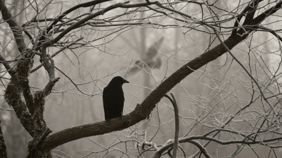 Decorative image of a crow on a branch