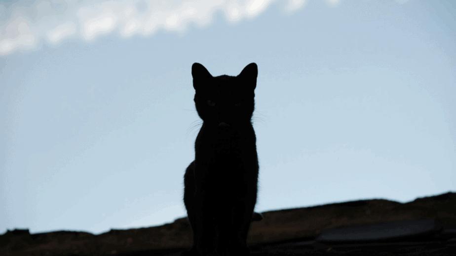 Decorative image of a black cat