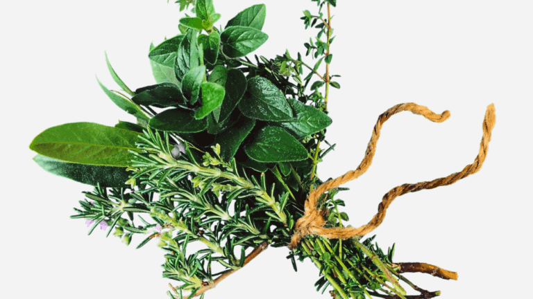 Learn Herbalism: The 10 Best Herbalist Books