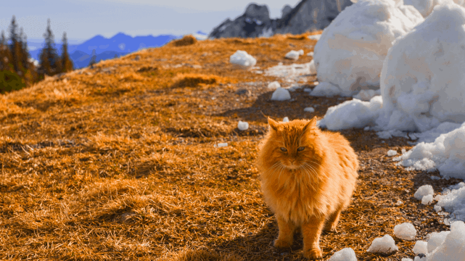 Decorative image of an orange fluffy cat sitting near mountains, trees, and big blocks of snow