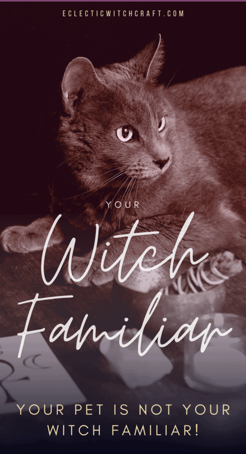 You can find your witch familiar but it probably isn't your pet! #witch #witchcraft #pagan #wicca