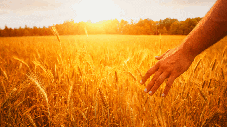 Lughnasadh / Lammas: The First Harvest Festival Of The Year