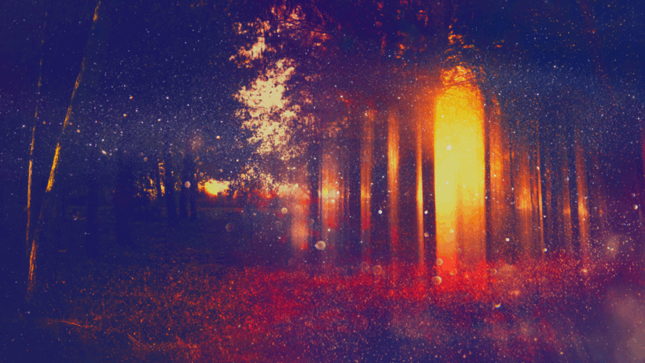 Decorative image of a glowing forest with bokeh. Eclectic witchcraft.