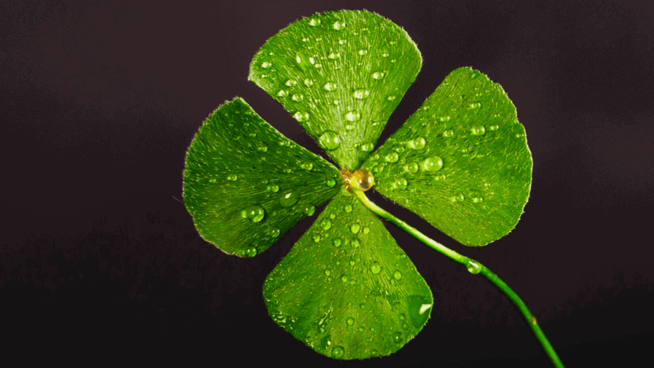 Decorative image of a 4 leaf clover for good luck
