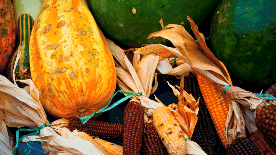 Decorative image of foods a kitchen witch might use during Mabon, like corn and gourds.