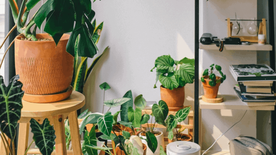 Decorative image of indoor plants staged aesthetically on shelves and stools