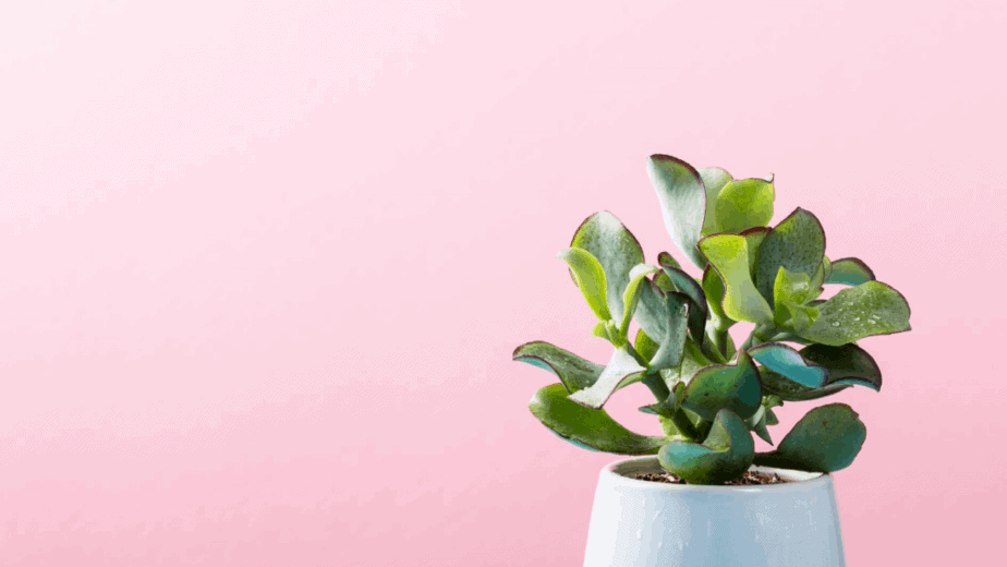 Learn about herbalism. Decorative image of a plant against a millennial pink background