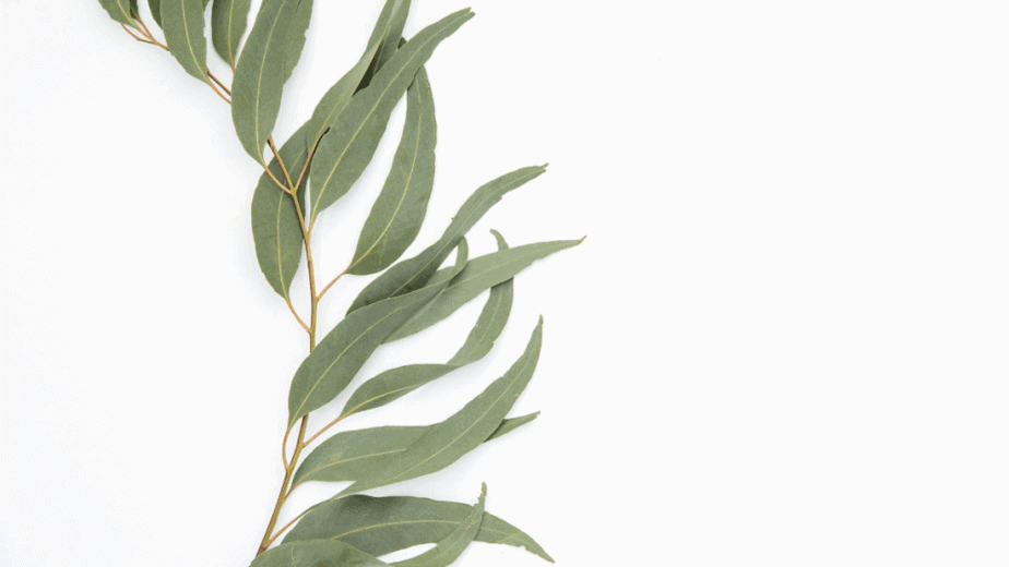 Decorative image of a plant with many leaves stretched out against a white background. It's easy to learn about herbalism.