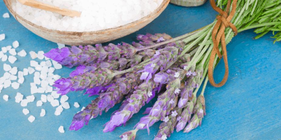 Decorative image of lavender plants
