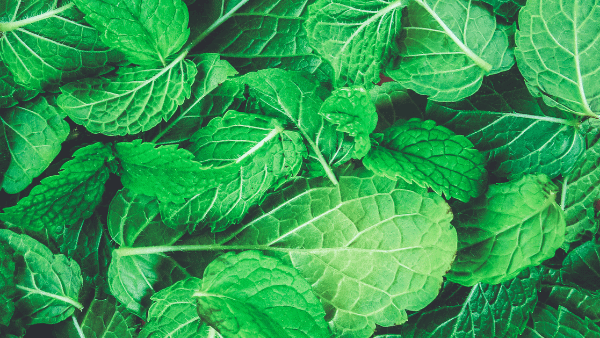 Decorative image of mint herbs for luck