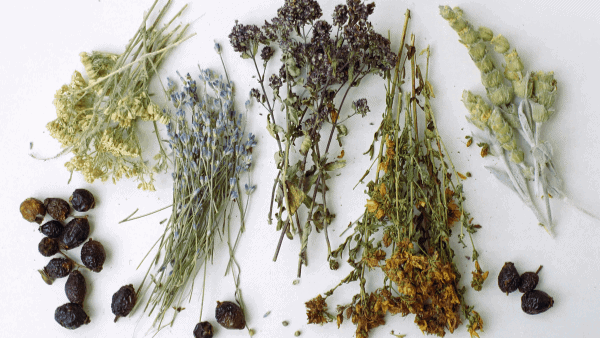 Decorative image of herbs for an herbal materia medica
