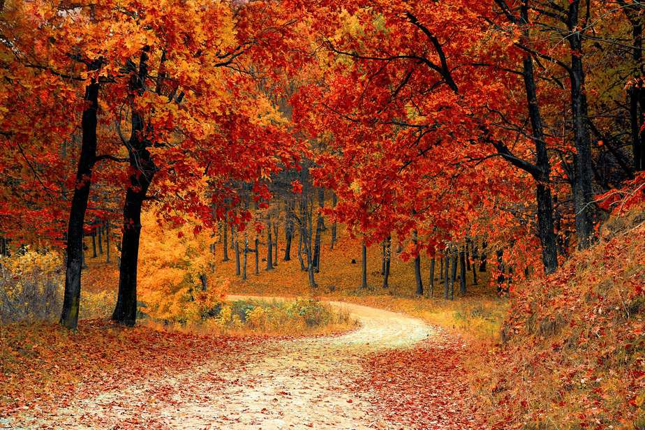 nature red forest leaves. You can set your samhain intention in the forest.