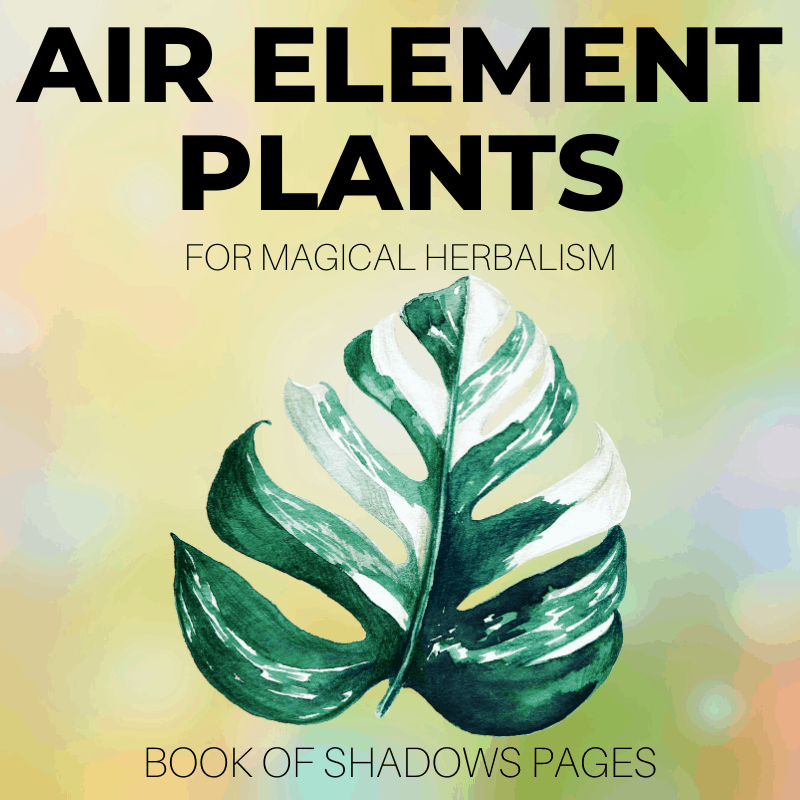 Air Element Plants: 30+ Divine Witch Herbs And Plants