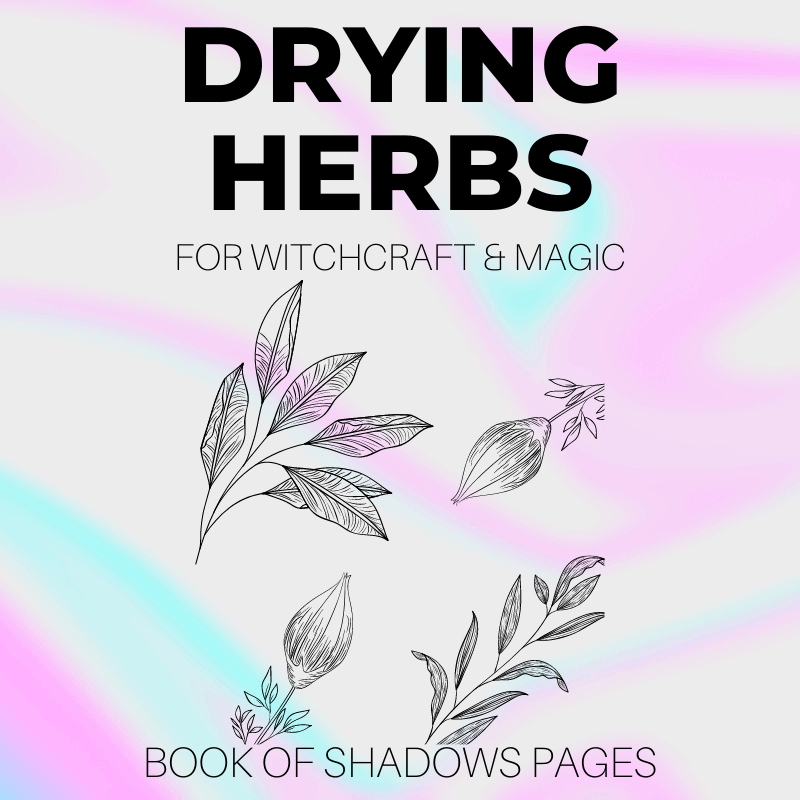 Drying Herbs For Herbal Magick: 3 Simple Magical Methods