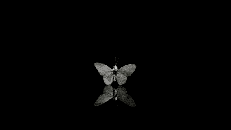 A moth in black and white with a reflection