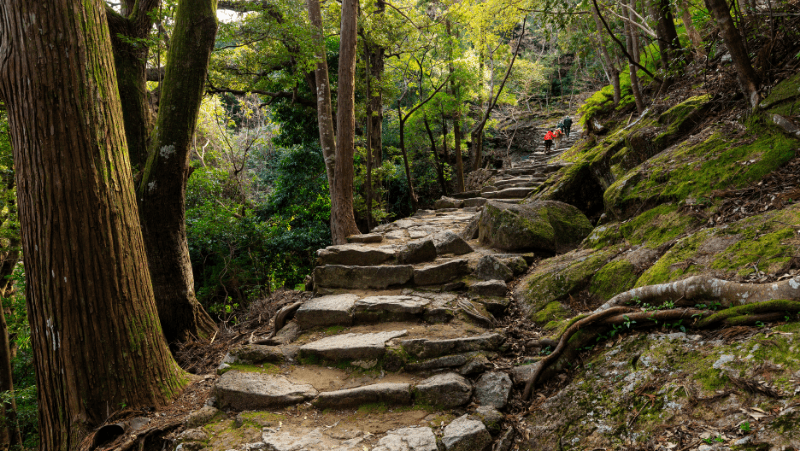 The stairs in the forest leading to a Japanese shrine. Will the miko of the shrine have a suitable Japanese witch name?