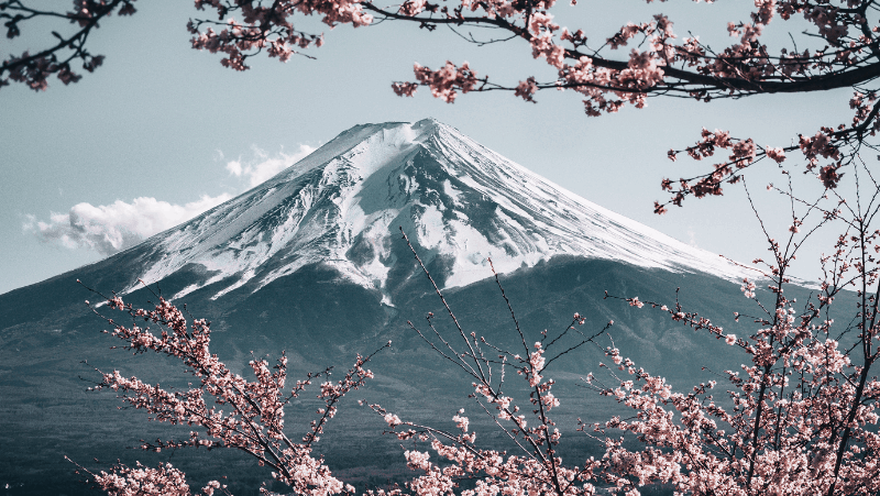 A Japanese mountain surrounded by cherry blossoms.