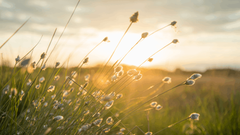 Sun goddesses are known for providing warmth and life. Sun setting over a field.