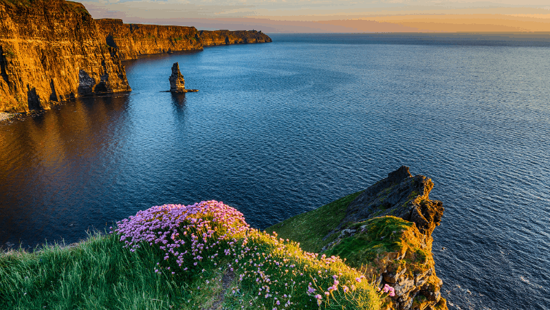 The Irish ocean and cliffs with flowers