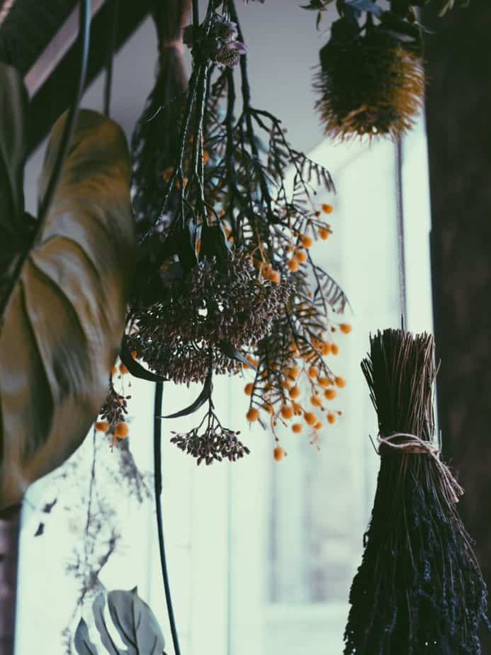 Herbs and besoms hanging from the ceiling