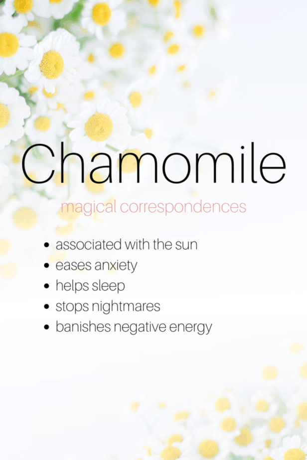 Chamomile magical correspondences include sun associations, easing anxiety, helping sleep, stopping nightmares, and banishing negative energy. Chamomile flowers.