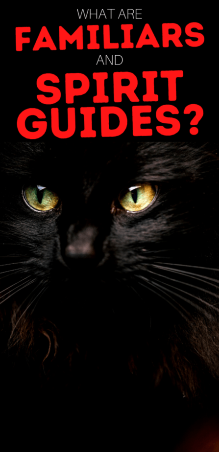 What are familiars and spirit guides? A black cat with long whiskers and yellow eyes.
