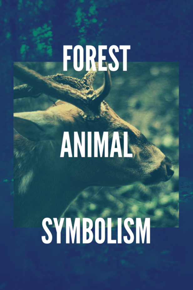 Forest animal symbolism. A deer in the forest with big antlers.