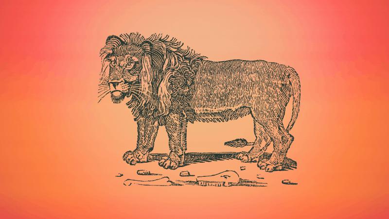 Lion on orange gradient background
